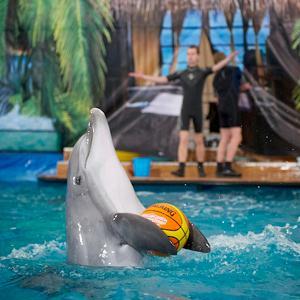 Дельфинарии, океанариумы Королева