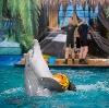 Дельфинарии, океанариумы в Королеве